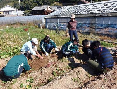 サツマイモ掘り3.jpg