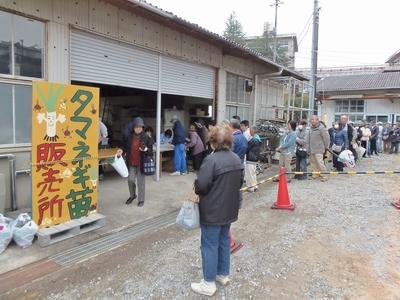 タマネギ苗販売所.jpg