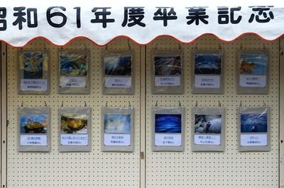 ダイビング海中パネル展.jpg