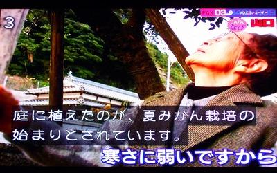 ナツミカン原樹2.jpg