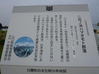 ハマオモト説明板.jpg