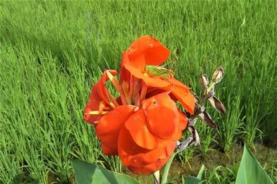 バッタと季節の花.jpg