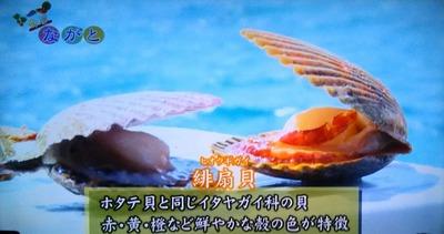 ヒオウギ貝1.jpg