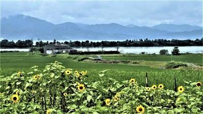 ヒマワリと棚田と青海湖と波の橋立7.9.jpg