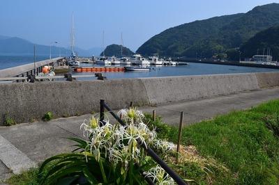フィッシャリーナ小島1.jpg