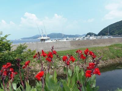 フィッシャリーナ小島と季節の花.jpg