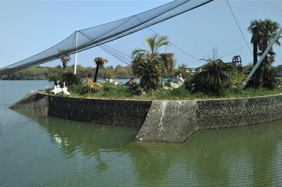 ペリカン島.jpg