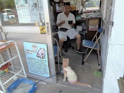 ラッパの正ちゃん・エサ代を稼ぐ猫「ももちゃん」.jpg