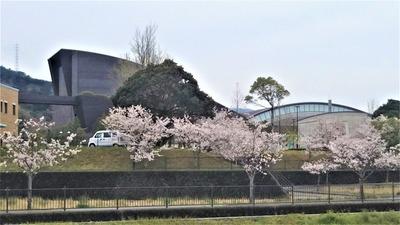 ルネッサながとの桜1.jpg