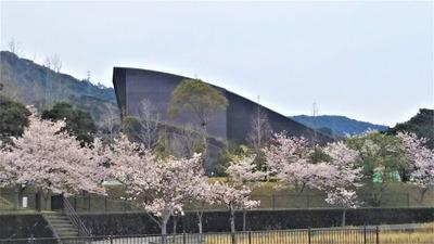 ルネッサながとの桜2.jpg