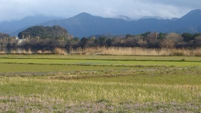 レンゲ畑1.jpg