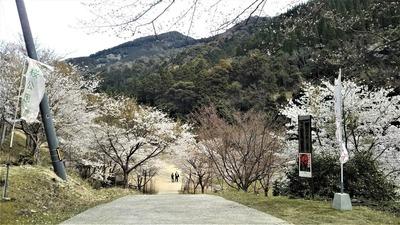 一の俣桜公園2.jpg