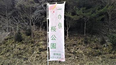 一の俣桜公園幟旗.jpg