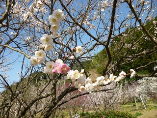 一枝2色の花2.jpg