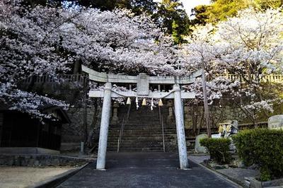 三の鳥居と満開の桜.jpg