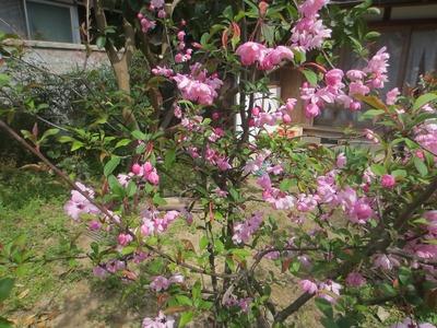 三輪さんの花.jpg