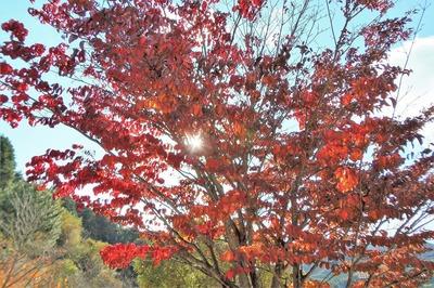 三隅ふれあいパークの秋色1.jpg