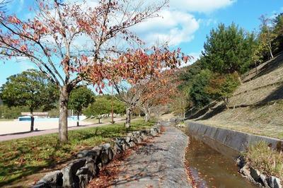 三隅ふれあいパークの秋色3.jpg