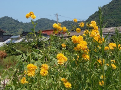 上田さんの季節の花.jpg