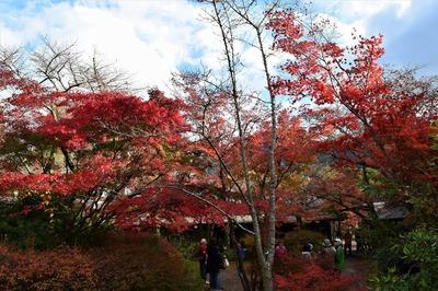 亀の井ガーデン5.jpg