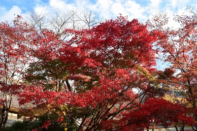 亀の井ガーデン7.jpg
