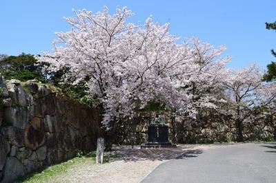 二の丸南門の桜1.jpg