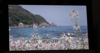 二位ノ浜3.JPG