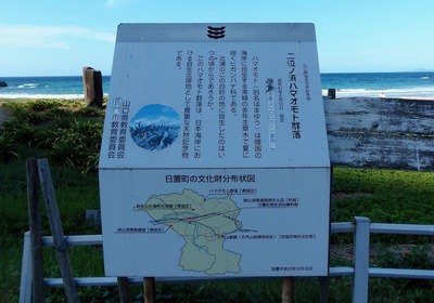 二位ノ浜ハマオモト群落説明.jpg