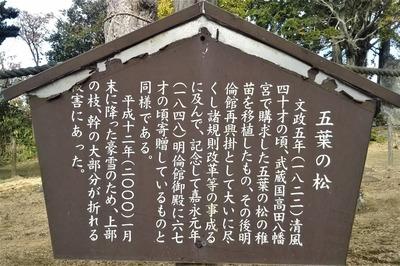 五葉の松説明.jpg