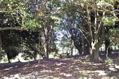 人工の森1.jpg