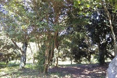 人工の森2.jpg