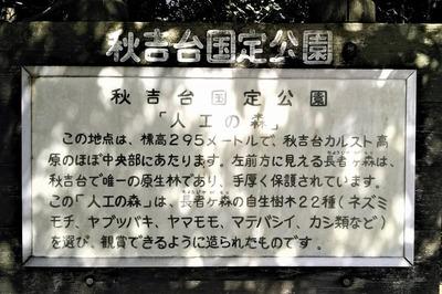 人工の森説明.jpg