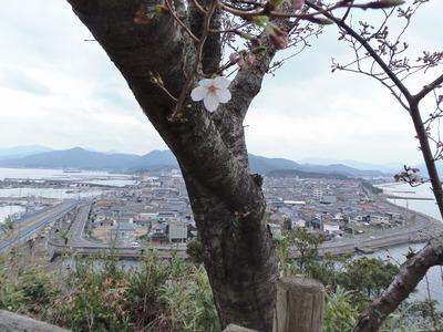 仙崎と桜1輪.jpg
