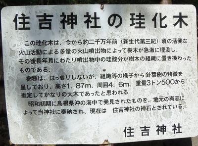 住吉神社の珪化木・説明.jpg