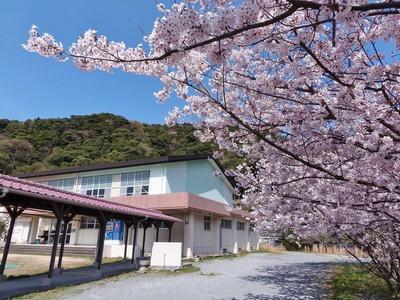 体育館と桜.jpg