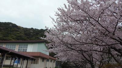 体育館と桜1.jpg