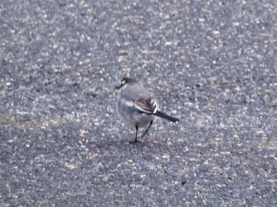 保護色の鳥2.jpg