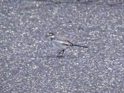 保護色の鳥3.jpg