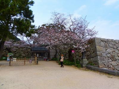 入口の桜.jpg