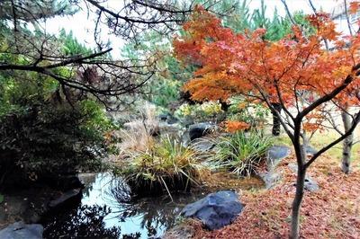 八坂神社の紅葉3.jpg