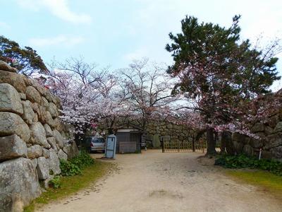 公園入口の桜1.jpg