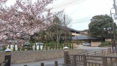 別邸・音信と桜.jpg
