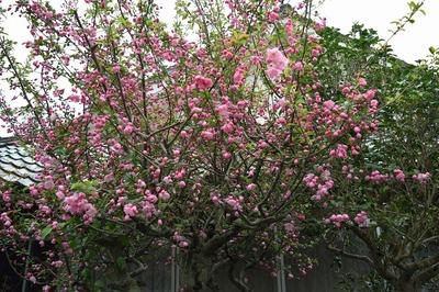 前田さんの季節の花.jpg
