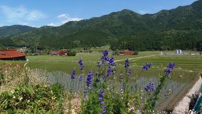 半田地区と季節の花.jpg