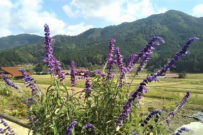 半田地区と季節の花1.jpg