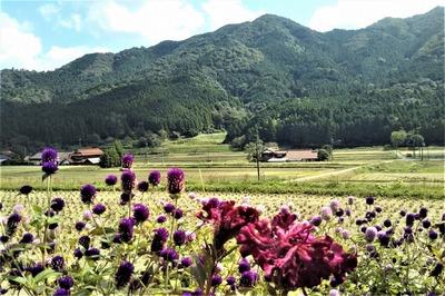 半田地区と季節の花2.jpg
