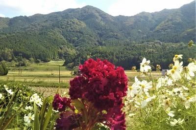 半田地区と季節の花3.jpg