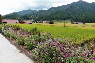 半田地区の季節の花.jpg
