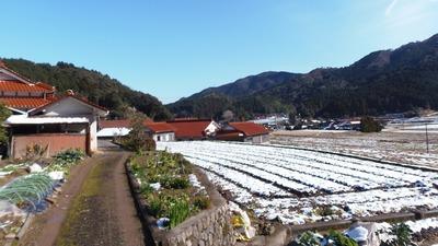 半田地区の残雪.jpg