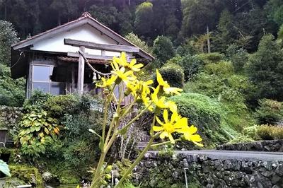 半田弁天とツワブキの花.jpg